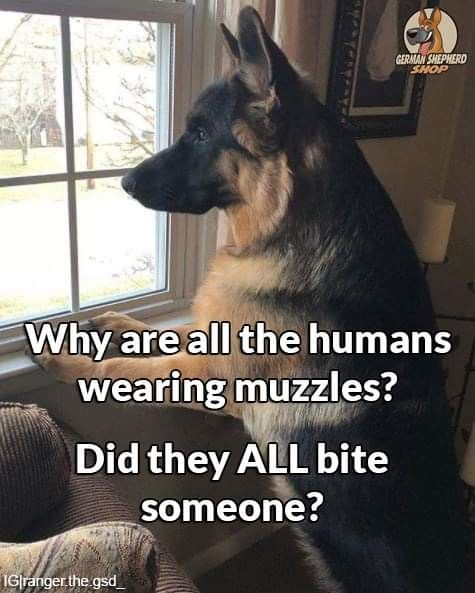 Pin By Renee Maddox On Pets Animals German Shepherd Funny Quotes German Shepherd Puppies Training Funny Animal Quotes