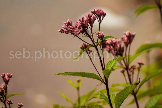 Wild Flowers at Tahquamenon SEBphotography