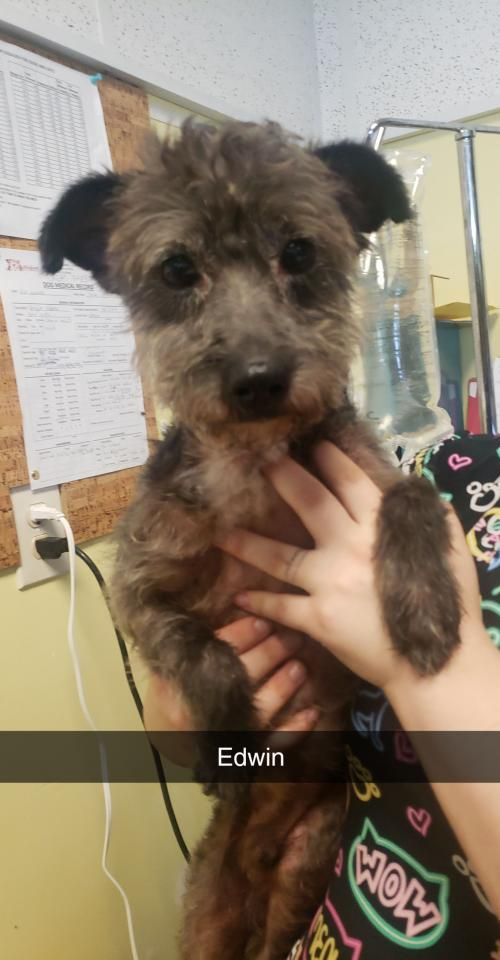 This Lonely Dog Needs A Home Thanks For Sharing Norfolk Terrier