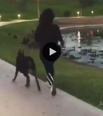 cachorro puxaa a mulher para agua