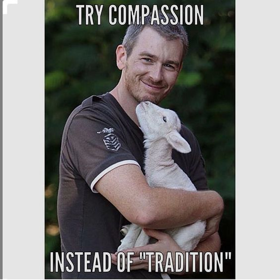"""love a lambs -- try compassion instead of """"tradition"""" -- why finance animal cruelty #vegan #compassion"""