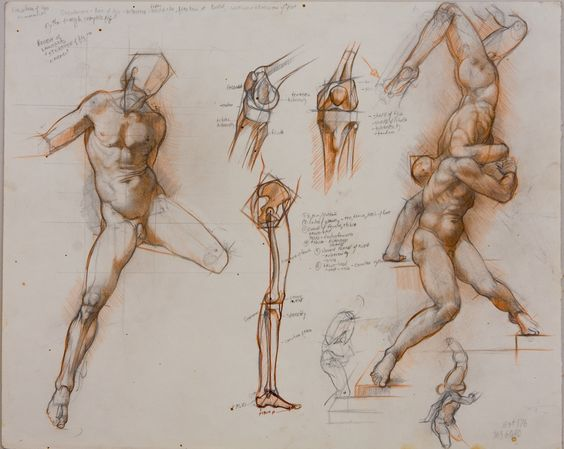 anatomy drawing, sabin howard