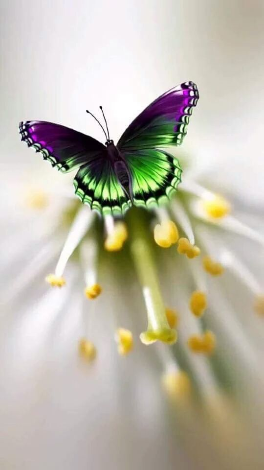 黒と緑の蝶