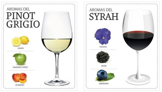 How to taste a wine? Second step: Smell  http://www.conchaytoro.com/wine-blog/how-to-taste-a-wine-second-step-smell/