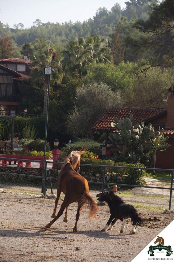 Keyifli bir gün / Enjoy your day. #Viverde #Hotel #Berke #Ranch #Kemer #Nature #Horse #Discovery #Enjoy #Day #View