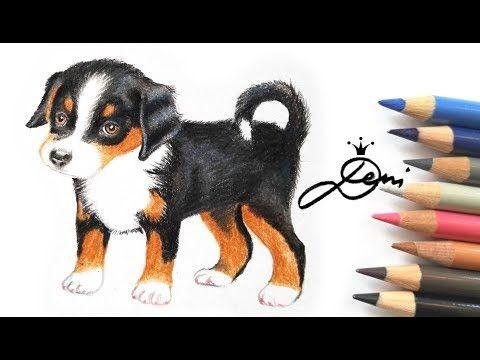 Appenzeller Hund Zeichnen Lernen How To Draw A Puppy Kak Se