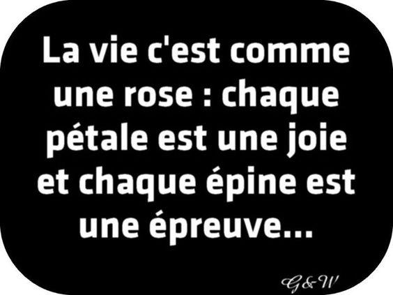 """""""La vie c'est comme une rose"""" : chaque pétale est une joie et chaque épine est une épreuve... - Le Petit Prince"""