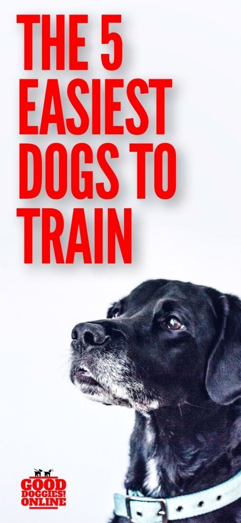 Dog Training Tricks Click The Picture For Lots Of Dog Obedience