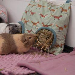 Heusack Haybag Heu Futter Meerschweinchen Kaninchen Cavy
