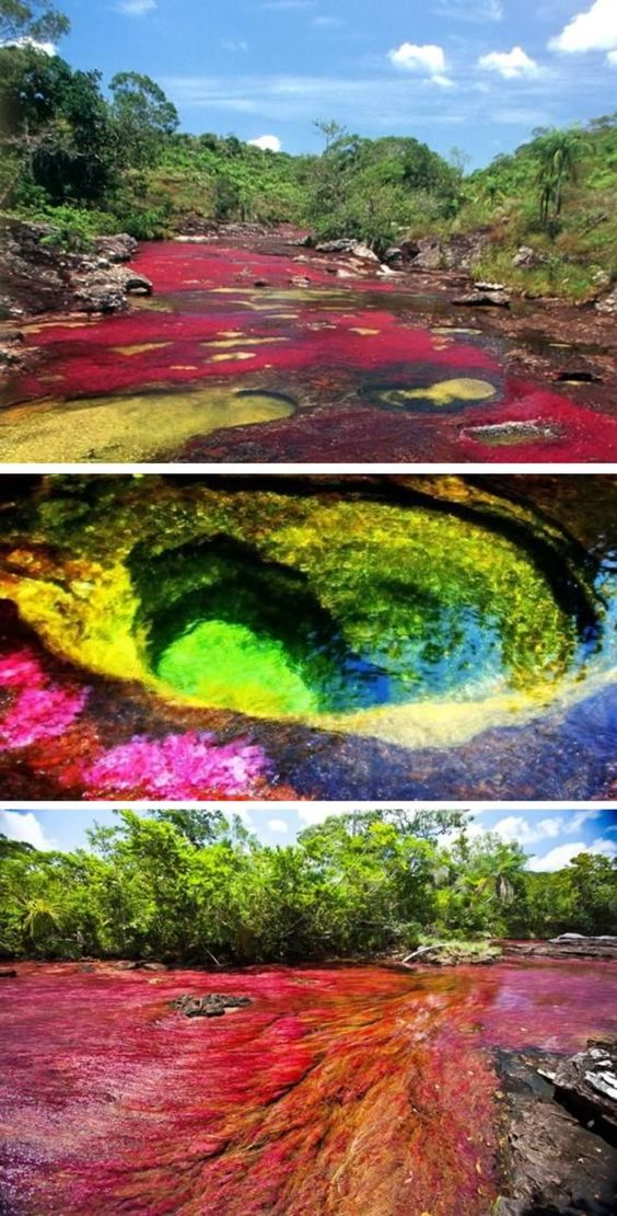 "Caño Cristales (Colombia) - Caño Cristales is a Colombian river located in the Serrania de la Macarena province of Meta. The river is commonly called ""The River of Five Colors"" or ""The Liquid Rainbow,"" and is referred to as the most beautiful river in the world due to its striking colors. The river appears in many hues–including yellow, green, blue, black, and especially red–which are caused by the Macarenia clavigera (Podostemaceae) at the bottom of the river."