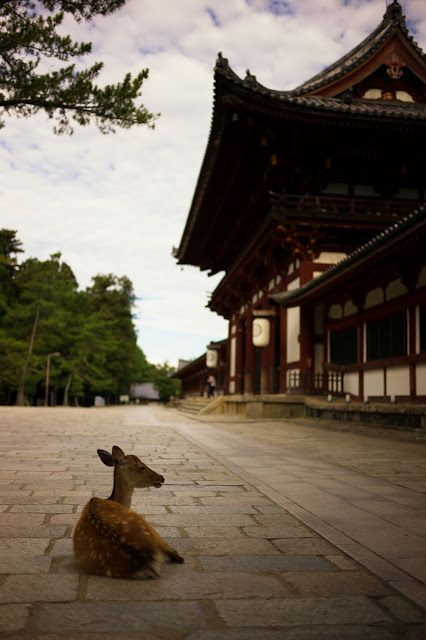 Nara Park (奈良公園) where the deer roam freely around the historic shrines and temples of the ancient capital.