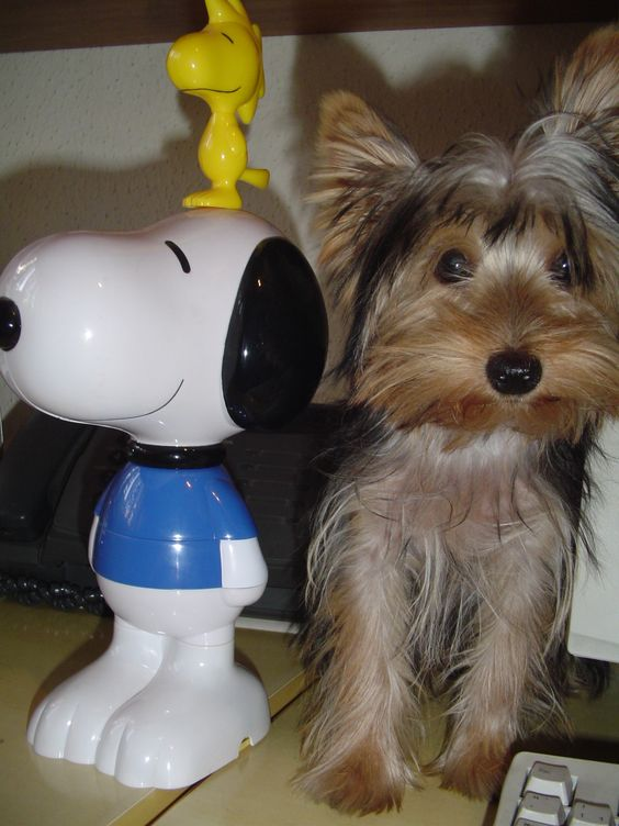 Spock e Snoopy - friends forever - yorkshire