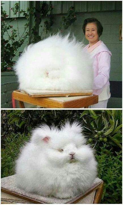 Nice hair. Rabbit