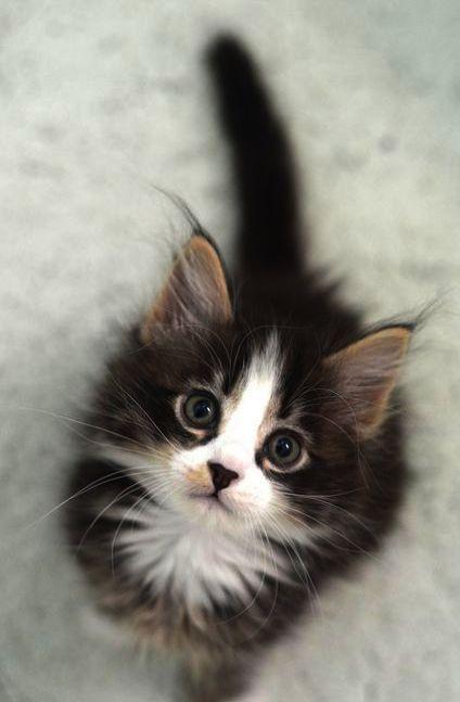 Christmas Purresnt Kittens Cutest Cute Cats Cute Animals