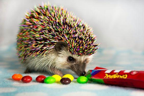 Hedgie Skittles: