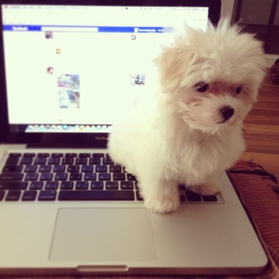 Puppy Turns Back on Facebook