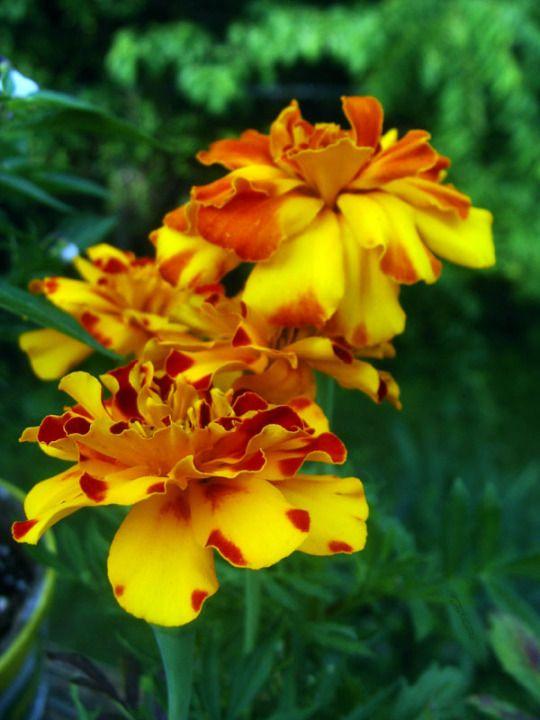 Pin On Flores Coleccion De
