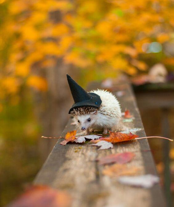Ёжик в шляпе | осень | Ñэллоуин | милое создание
