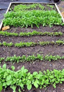 Planning Your Vegetable Garden - Growing What You Eat