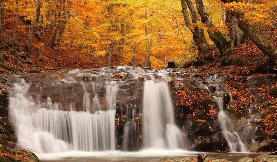 осень картинки красивые: 88 тыс изображений найдено в Яндекс.Картинках