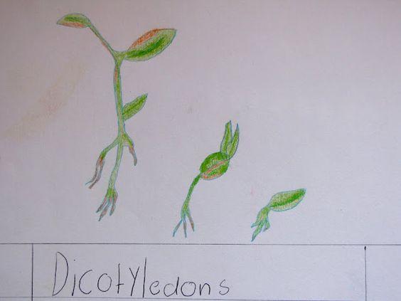 another homeschool botany block