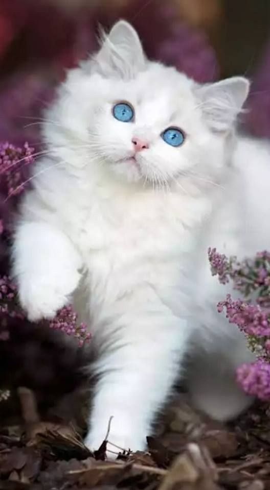 Cat In The Garden Flowers Cute Cats Beautiful Cats Pretty Cats