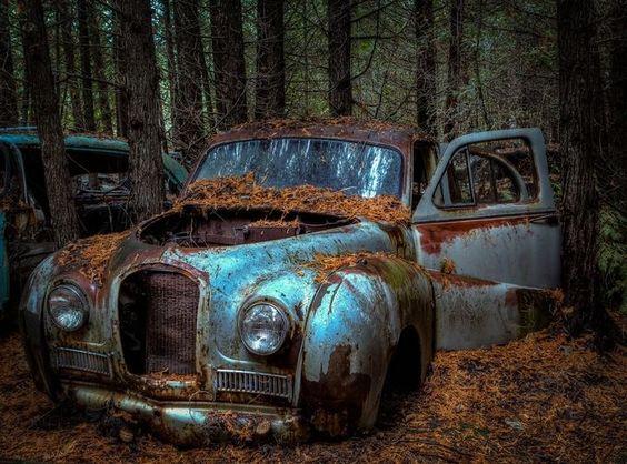 Lost in the Cedars by Kriskow - Freshmen 2016 Photo Contest Vol 2
