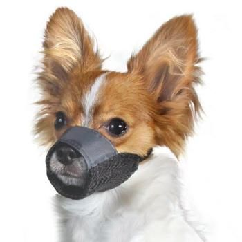 Small Dog Muzzle Petco
