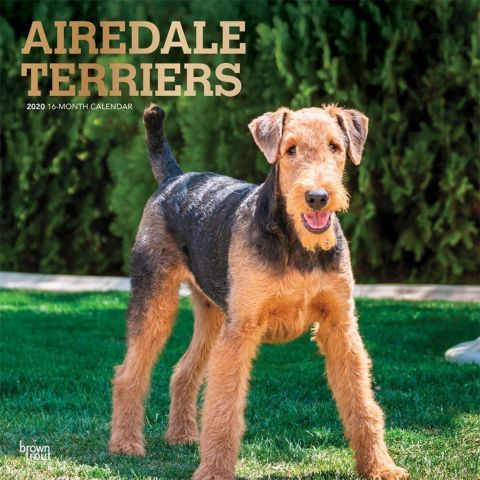 Airedale Terriers 2020 Calendar Airedale Terrier Dog Breeds Terrier