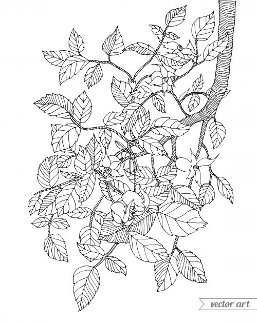 Branch Coloring Page Coloring, Pictures of and Pictures