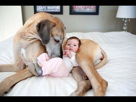 BEST Funny Dogs Video - Big Dogs Playing with Babies Compilation 2016 [N...