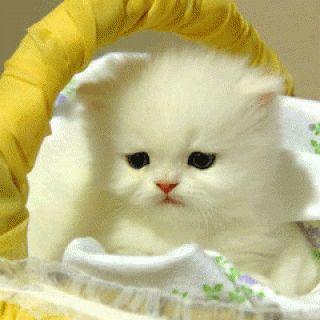 imagenes-de-perritos-y-gatitos-tiernos-ydivertidos-con-movimiento-7-320x320.gif (320×320)