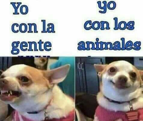 Pin By Angy Isabel On Animalitos Funny Spanish Memes Funny Memes Animal Memes