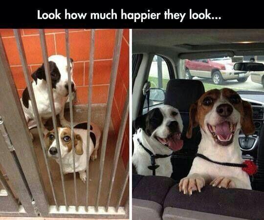 Adopt don't shop.  Um, yeah...this speaks volumes!!!