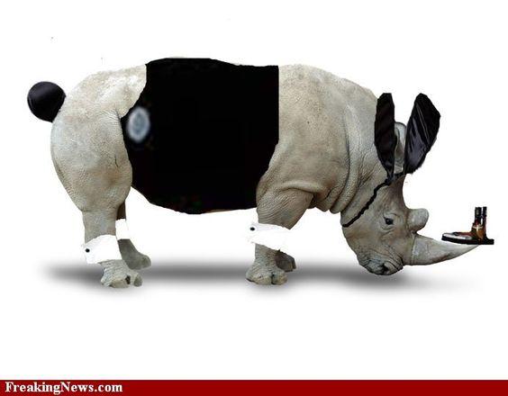 Playboy rhino