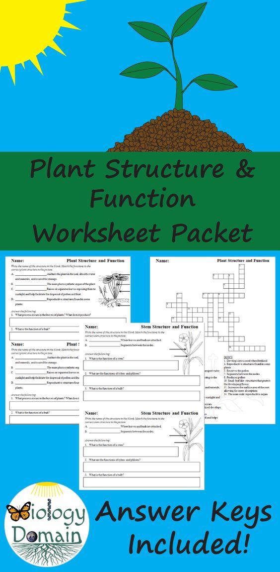 Leaf Anatomy Project What Makes A Leaf Leaf Structure Leaf Structure And Function Anatomy Projects