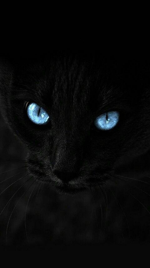 Hd Whatsapp Wallpapers Black Cat Staring Eyes Wallpaper Fondosdepantalla Whatsapp Animal Cat Wallpaper Animal Wallpaper Cat Art