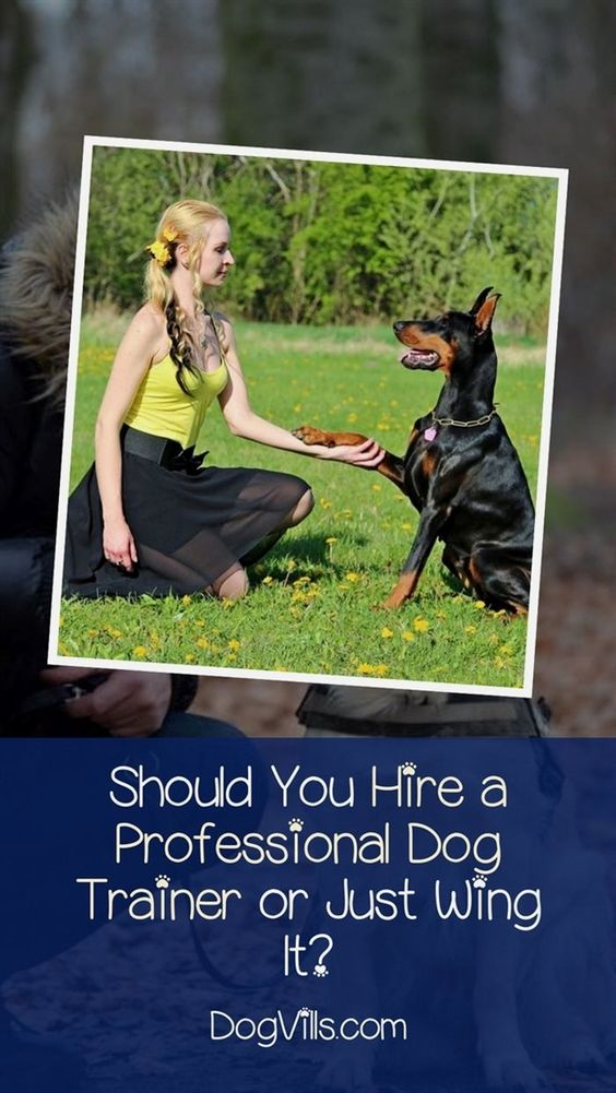 Dog Training Collar Reviews Don Sullivan Dog Training Youtube