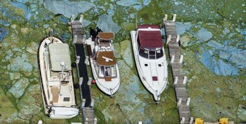 Emergencia en Florida por brote de algas -...