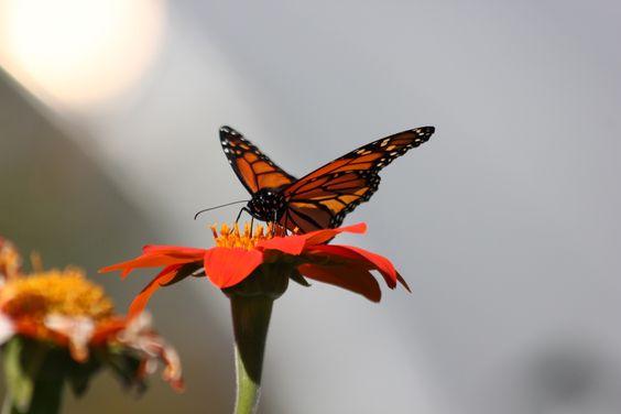 Capture My Vermont - Shades of Orange by Cindee Lee Shallberg