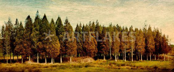 """""""Stand of Trees"""" Fotografie von Linde Townsend jetzt als Poster, Kunstdruck oder Grußkarte kaufen.."""