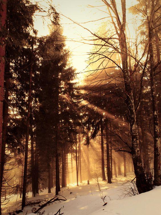 L'hivers (34)   La forêt