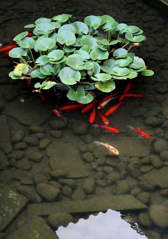 Japanese Pond Nothing Could Be More Calming Then To Sit