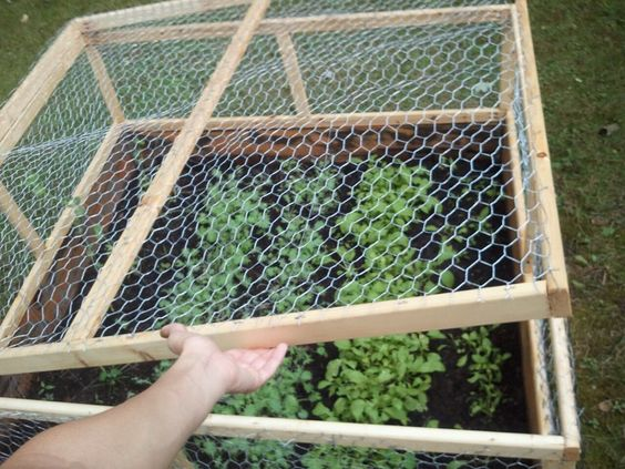 My husbands wedding gift to me a chickenwire garden cover with