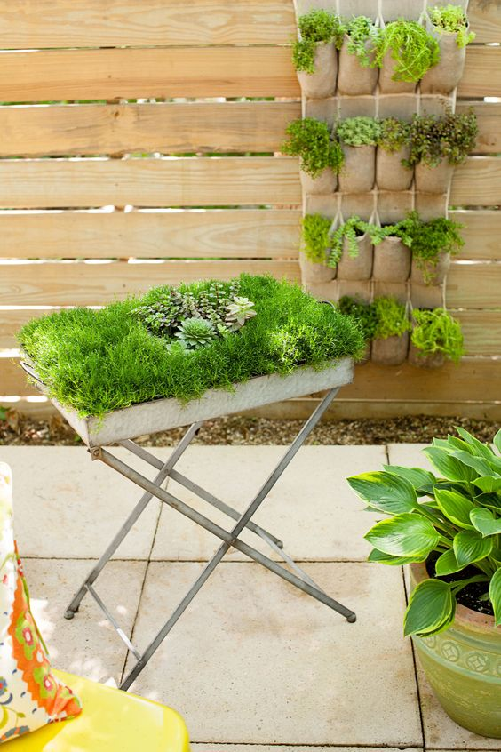Pinterest the world s catalog of ideas for Small area planting ideas