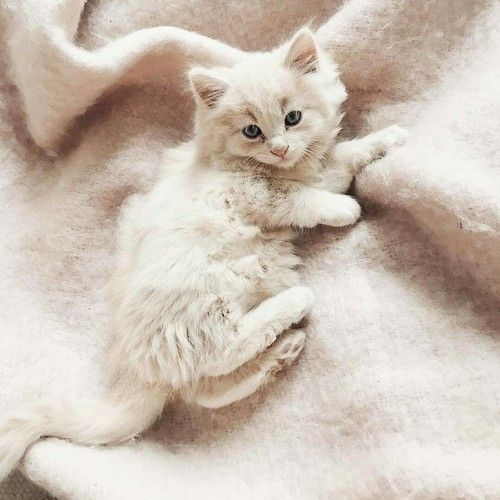 Animal Cat And Cute Image Kittens Cutest Cats And Kittens