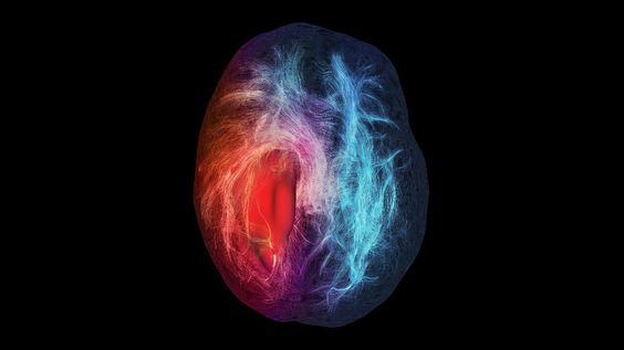 Premio para los latidos de un corazón que sorprende a los cardiólogos | Materia