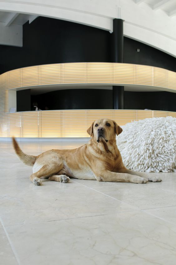 Chilling in the contemporary lobby of a pet friendly 5-star resort in Tuscany