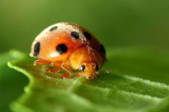 best ladybug photos