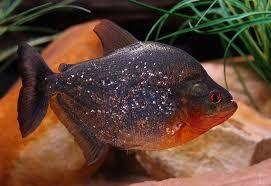 Resultado de imagen para animales acuaticos